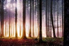 Ln10813211-Strahlender Herbstwald