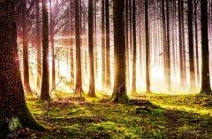 Ln10815211-Herbstwald in der Abendsonne