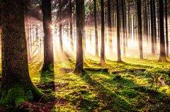 Ln10824211-Herbstwald am Abend