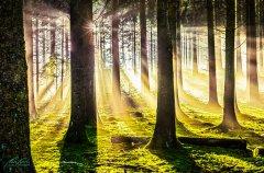Ln10826211-Herbstwald im Sonnenschein - Forest in autumn