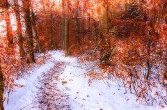 Ln11130212-Weg durch den Winterwald