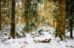 Ln11828301-Wald im Winterschlaf