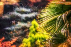 Ln15609310-Inmitten von Bäumen - Amid trees