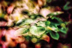 Bn100346806-Rosenblätter umgeben von Farben und Licht
