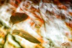 Bn103606810-Herbstblätter