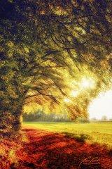 Ln103697910-Herbstlicher Waldrand