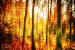 Ln103759911-Herbstwald abstrakt