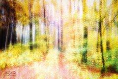 Ln103823911-Abstrakter Herbstwald im Sonnenschein