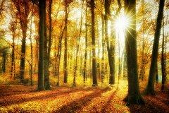 Ln104078911-Herbstwald mit Sonnenstern