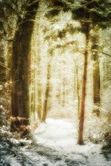 Ln104367901-Waldweg im Schnee
