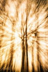 Ln104582902-Baum im Licht
