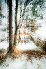 Ln104635902-Verschneiter Holzzaun am Waldrand - abstrakt
